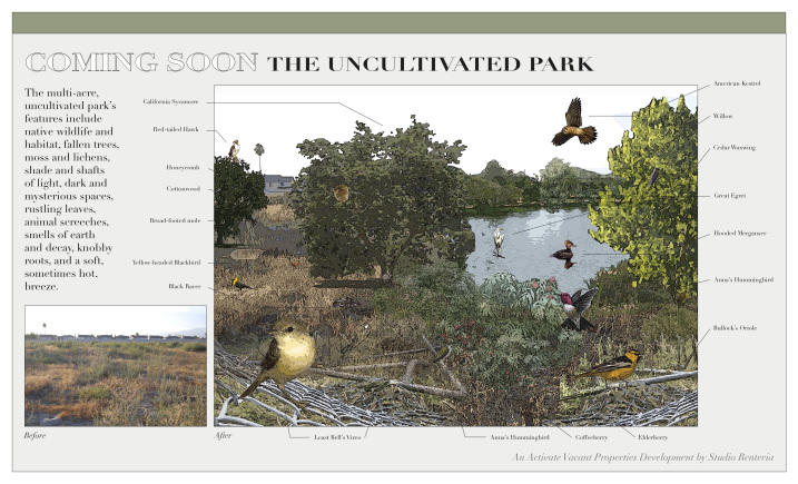 jennifer-renteria-uncultivated-park