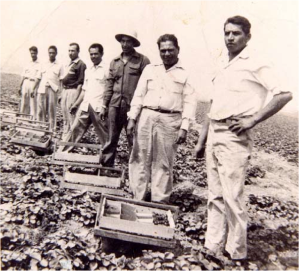 Strawberry pickers on strike