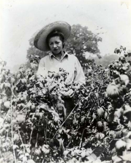 "Woman picking berries, ""Berries"" Courtesy of La Historia Society of El Monte California"