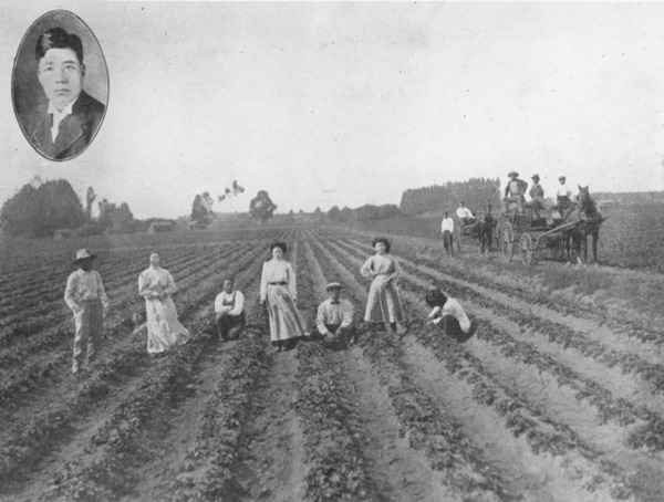 Japanese family in a Gardena strawberry field, 1912 | Photo: County of Los Angeles Public Library