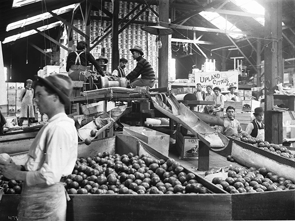Interior of citrus packing house in Ontario, CA. Photo courtesy of Wikimedia Commons.
