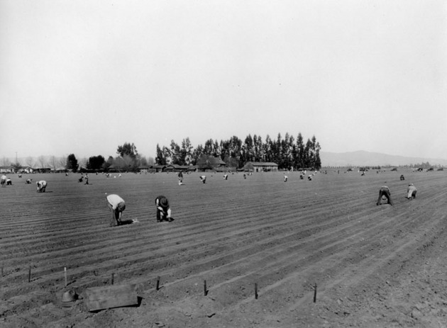 Planting onions on the Petit Ranch in the San Fernando Valley near Van Nuys on February 3, 1920 | Security Pacific National Bank Collection, Los Angeles Public Library