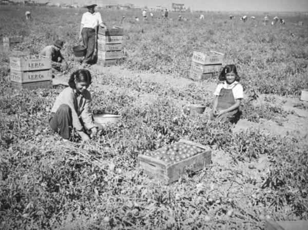 Family picking tomatoes in the San Fernando Valley, ca. 1937 | Herman J. Schultheis Collection, Los Angeles Public Library