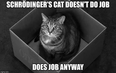 Schrodinger's Cat meme