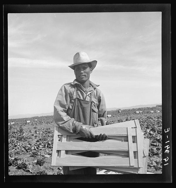 "Dorothea Lange, ""Filipino lettuce field laborer. Imperial Valley, California"", February 1939, Farm Security Administration Collection, Prints and Photographs Division, Library of Congress"