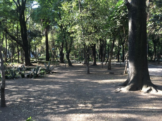 Parque Espana, across the street from the notorious Condesa DF