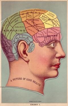 phrenology map