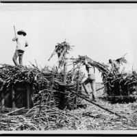 Interracial Coalitions and the Hawaiian Sugar Strike of 1946